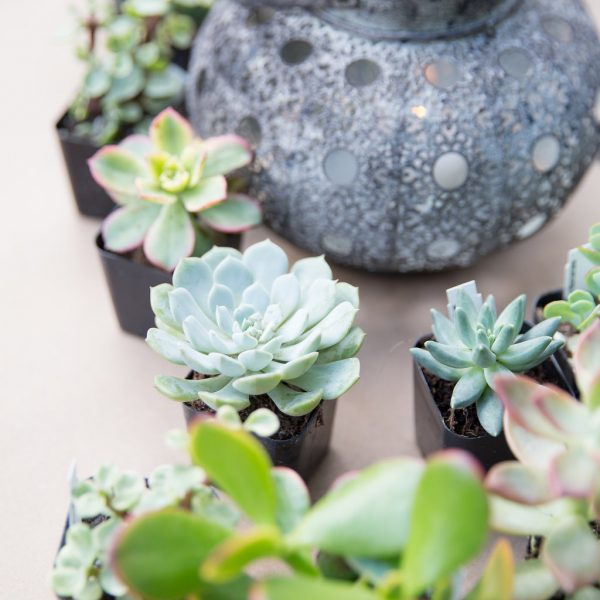 lantern and plants